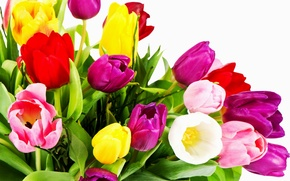Picture white, yellow, red, tulips