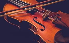 Wallpaper music, violin, macro