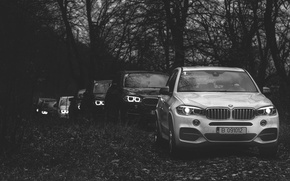 Picture forest, BMW, BMW, New, jeeps