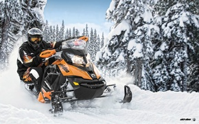 Picture Trees, Snow, Forest, Snowmobile, Snowmobile, Ski-Doo