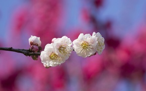 Picture the sky, flowers, branch, spring, garden