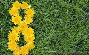 Picture flowers, yellow, grass, dandelions, March 8, in the background, women's day, green
