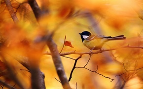 Wallpaper bokeh, branch, bird, autumn, leaves