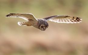 Picture birds, nature, owl, bird, wings, flight, the scope, owl