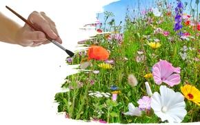 Picture grass, brush, wildflowers