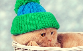 Picture cat, cat, basket, hat