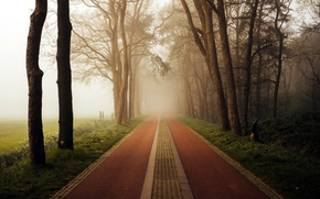 Picture road, trees, morning