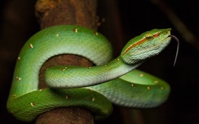 Picture language, night, snake, branch