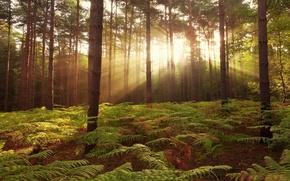 Picture FOREST, NATURE, UNITED KINGDOM, BROXBOURNE WOODS