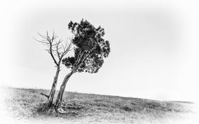 Wallpaper field, background, tree