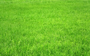 Wallpaper field, grass, green