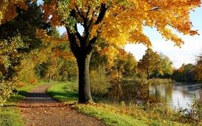 Wallpaper tree, Park, autumn