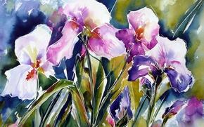 Wallpaper flowers, watercolor, irises