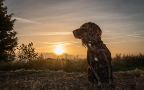 Picture look, sunset, each, dog