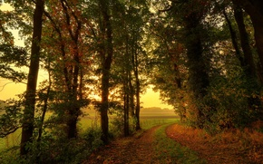 Picture road, field, autumn, forest, trees, nature