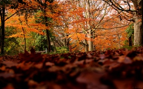 Picture autumn, forest, foliage, colors, forest, Autumn, leaves, fall