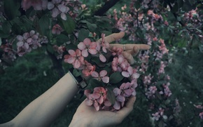Picture forest, summer, flowers, tree, pink, hands, beautiful, 2016
