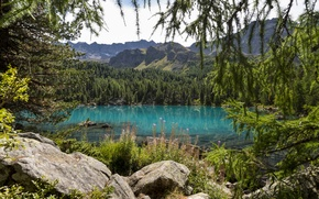 Wallpaper forest, trees, flowers, mountains, nature, lake, spruce, coniferous