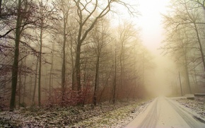 Wallpaper frost, road, forest, snow, trees, traces, Winter