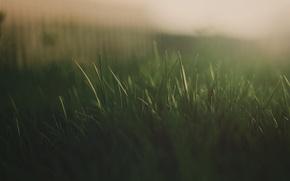 Picture grass, macro, light, green, sweet