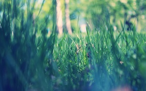 Picture grass, macro, Park, spring, morning, green