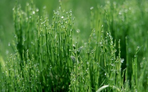 Wallpaper grass, drops, green