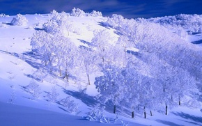 Picture winter, the sky, snow, trees, hills, slope