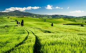 Picture field, landscape, Italy, Tuscany