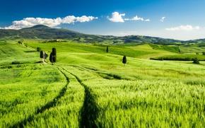 Wallpaper field, landscape, Italy, Tuscany