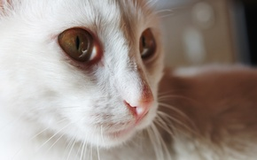 Picture macro, cats, Animals