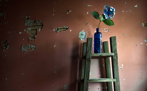 Wallpaper flowers, bottle, wall