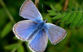 Picture blue, green, Butterfly