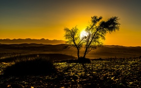 Picture the sky, the sun, sunset, mountains, tree, silhouette