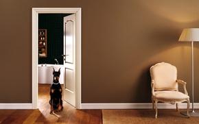 Wallpaper interior, chair, bathroom, doggie
