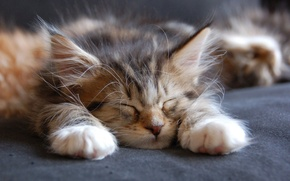 Picture face, paws, sleeping, ears, kitty
