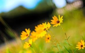 Wallpaper summer, the sun, macro, flowers, photo