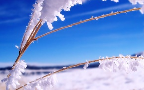 Picture ice, winter, branch, Snow