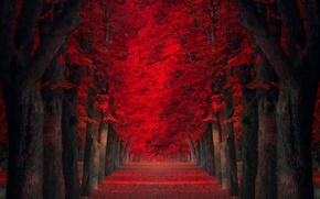 Picture trees, alley, red leaves