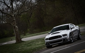 Picture road, forest, tree, mustang, Mustang, turn, ford, Ford, roush
