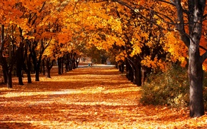 Wallpaper leaves, autumn, trees, alley, yellow, Park, Sunny