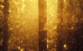 Picture winter, forest, snow, nature, Joni Niemela