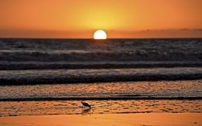 Picture sea, wave, sunset, seagulls, horizon, orange sky