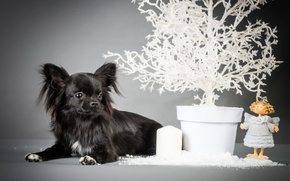 Picture black, angel, puppy