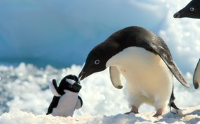 Picture snow, toy, penguin