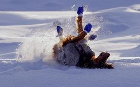 Picture snow, joy, pose, Winter, dog