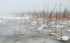 Picture winter, landscape, nature, lake, reed