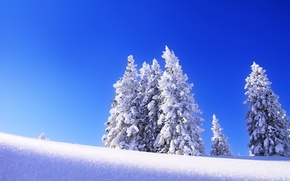 Picture winter, the sky, snow, trees, landscape, tree, spruce, morning, frost