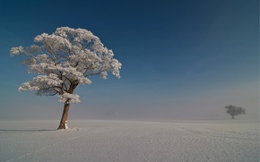 Picture frost, the sky, snow, trees, blue, Winter