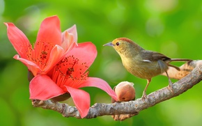 Picture flower, Bud, branch, bird, nature