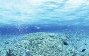 Picture sea, wave, drops, fish, algae, glare, fish, art, waves, sea, art, drops, fish, water and …